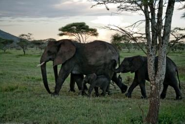 Tanzania-Serengeti_National_Park-090-DSC_5273