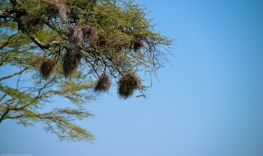 Tanzania-Serengeti_National_Park-091-DSC_5407