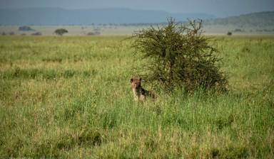 Tanzania-Serengeti_National_Park-092-DSC_5326