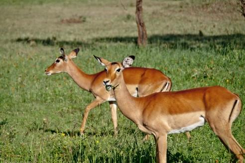 Tanzania-Serengeti_National_Park-098-DSC_5638