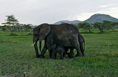Tanzania-Serengeti_National_Park-100-DSC_5274