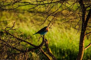 Tanzania-Serengeti_National_Park-102-DSC_5808