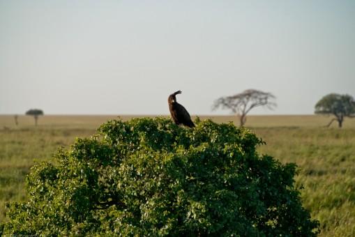 Tanzania-Serengeti_National_Park-103-DSC_5821