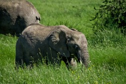 Tanzania-Serengeti_National_Park-104-DSC_5379