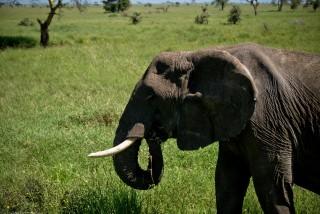 Tanzania-Serengeti_National_Park-106-DSC_5480