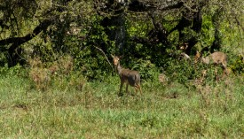Tanzania-Serengeti_National_Park-108-DSC_5553