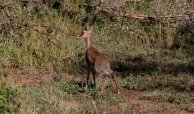 Tanzania-Serengeti_National_Park-109-DSC_5868