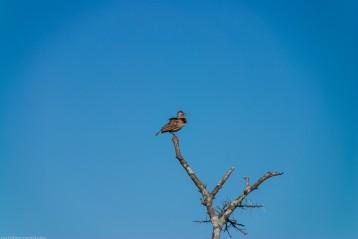 Tanzania-Serengeti_National_Park-112-DSC_5337