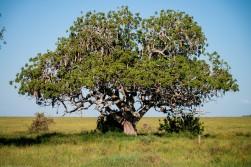 Tanzania-Serengeti_National_Park-115-DSC_5656