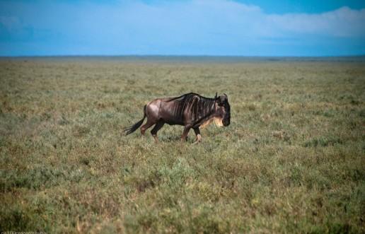 Tanzania-Serengeti_National_Park-116-DSC_5229