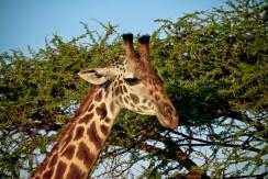 Tanzania-Serengeti_National_Park-118-DSC_5804