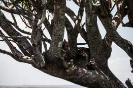 Tanzania-Serengeti_National_Park-119-DSC_5923