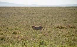 Tanzania-Serengeti_National_Park-120-DSC_5939