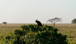 Tanzania-Serengeti_National_Park-122-DSC_5820