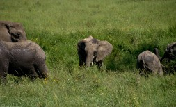 Tanzania-Serengeti_National_Park-124-DSC_5495