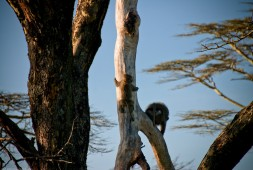 Tanzania-Serengeti_National_Park-125-DSC_5816