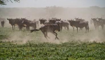 Tanzania-Serengeti_National_Park-127-DSC_5193