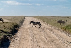 Tanzania-Serengeti_National_Park-130-DSC_5217