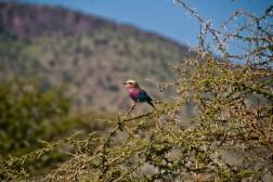 Tanzania-Serengeti_National_Park-134-DSC_5872