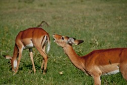 Tanzania-Serengeti_National_Park-135-DSC_5643