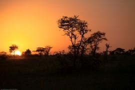 Tanzania-Serengeti_National_Park-141-DSC_5772