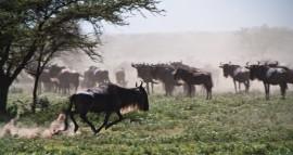Tanzania-Serengeti_National_Park-142-DSC_5192