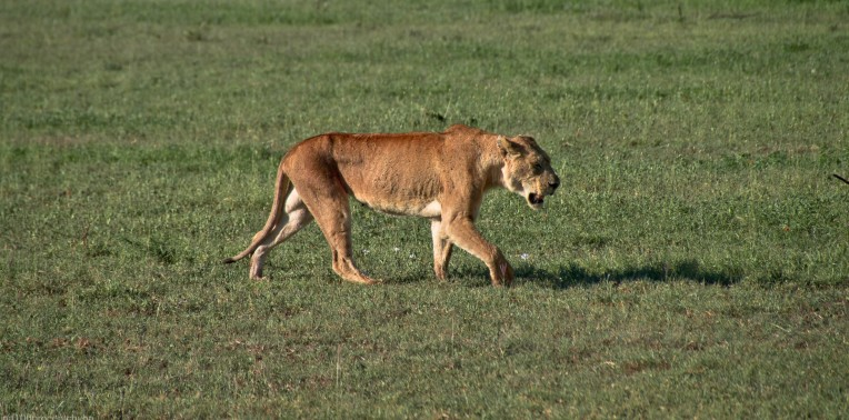 Tanzania-Serengeti_National_Park-145-DSC_5310