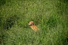 Tanzania-Serengeti_National_Park-146-DSC_5449