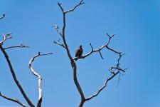 Tanzania-Serengeti_National_Park-147-DSC_5613