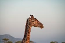 Tanzania-Serengeti_National_Park-148-DSC_5789