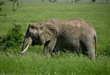 Tanzania-Serengeti_National_Park-152-DSC_5380
