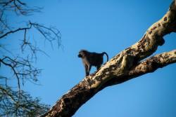 Tanzania-Serengeti_National_Park-154-DSC_5811