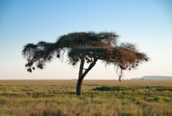 Tanzania-Serengeti_National_Park-155-DSC_5673