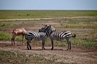 Tanzania-Serengeti_National_Park-157-DSC_5927