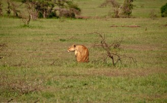 Tanzania-Serengeti_National_Park-158-DSC_5321