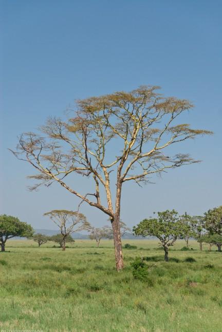 Tanzania-Serengeti_National_Park-159-DSC_5406