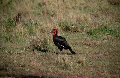 Tanzania-Serengeti_National_Park-160-DSC_5849