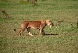 Tanzania-Serengeti_National_Park-165-DSC_5311