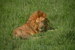Tanzania-Serengeti_National_Park-166-DSC_5416