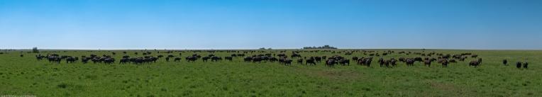 Tanzania-Serengeti_National_Park_2014_[Panorama]-DSC_5515_DSC_5534-20_images