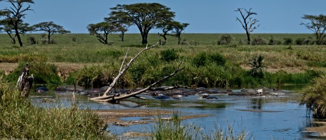 Tanzania-Serengeti_National_Park_2014_[Panorama-DSC_5593_DSC_5598-6_images