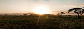 Tanzania-Serengeti_National_Park_2014_[Panorama]-DSC_5694_DSC_5703-10_images