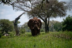 Tanzania-Tarangire_National_Park-003-DSC_6196