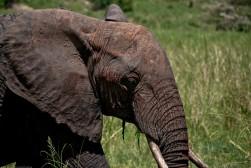 Tanzania-Tarangire_National_Park-005-DSC_6202