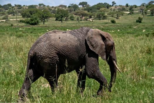 Tanzania-Tarangire_National_Park-007-DSC_6205