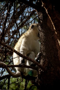Tanzania-Tarangire_National_Park-008-DSC_6119