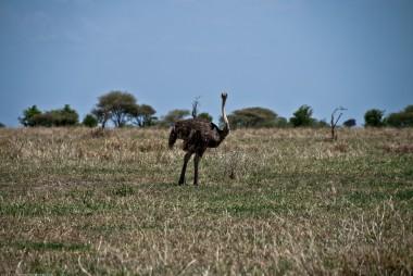 Tanzania-Tarangire_National_Park-009-DSC_6182
