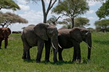 Tanzania-Tarangire_National_Park-010-DSC_6206