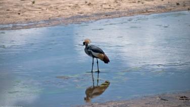 Tanzania-Tarangire_National_Park-011-DSC_6251