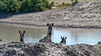 Tanzania-Tarangire_National_Park-012-DSC_6126